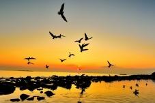 太阳出来了(祝贺荣获首页鸟类精华)