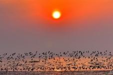 早起的鸟儿(祝贺老师佳作荣获首页鸟类精华