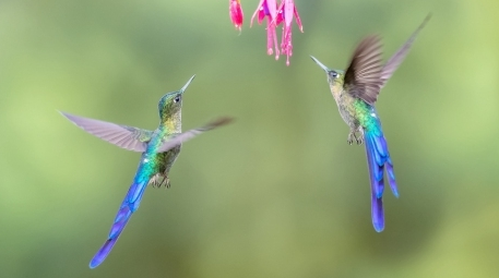 花鸟图——欢庆双节