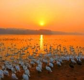 保护野生动物鸟网大有可为!
