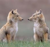 由新冠肺炎疫情引发的野生动物保护反思