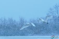 无惧风雪比翼飞