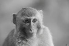 以相机作武器   为野生动物保护贡献力量!