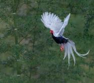看门老头:鸟类摄影的审美