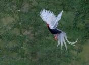 看门老头:鸟类摄影  我们需要什么样的审美(一家之言