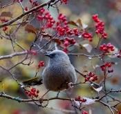 关于举办中国生态摄影师野生动物摄影(独龙