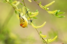 春季(祝贺荣获首页鸟类精华)