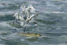 鱼鹭共舞迎双节