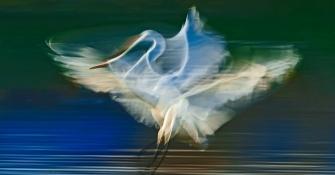 创意摄影:白鹭曼舞(1/5S)