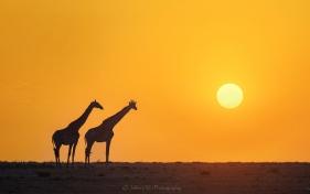 2017 夏季非洲野生动物摄影手记(二)