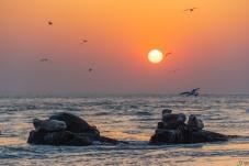 生机盎然渤海湾