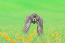 动感乌林鸮