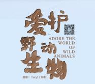 【4月4日更新】野保海报