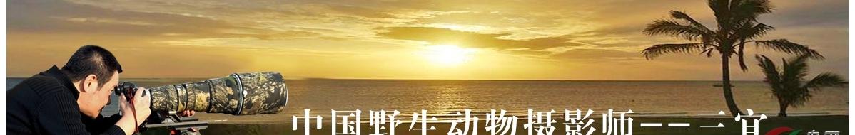 Z 006 三宜:靡不有初,鲜克有终