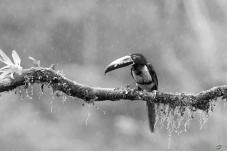 问好黑白版的鸟友们!!!