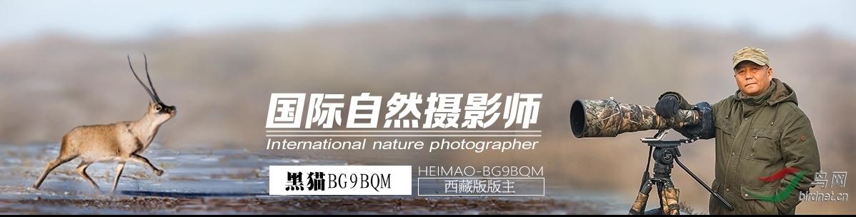 011【国际自然摄影师】黑猫BG9BQM:偶遇小