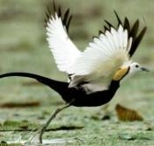 7月27日东平湖鸟类视频现场拍摄讲解及后期