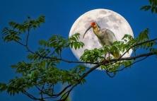 祝摄友们:中秋佳节快乐,月圆人圆事事圆。