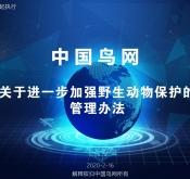 中国鸟网关于进一步加强野生动物保护的管理
