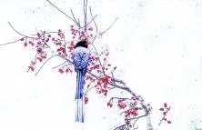 国画--红嘴蓝鹊