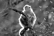 霞光中的滇金丝猴