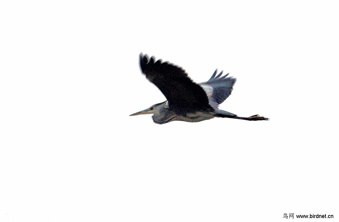 梦见好多喜鹊在天上飞 梦见成群喜鹊在天上飞
