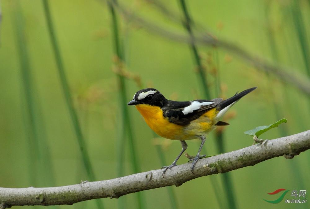 51期间小区拍的几只小鸟1.jpg