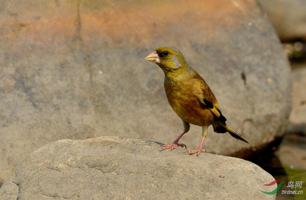 51期间小区拍的几只小鸟2.jpg