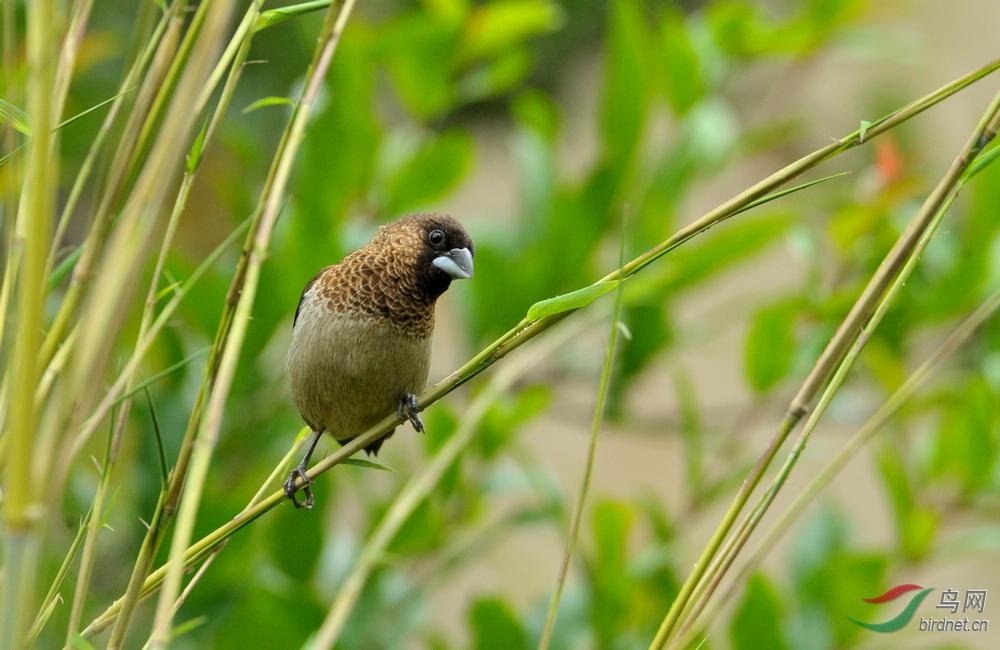 51期间小区拍的几只小鸟4.jpg