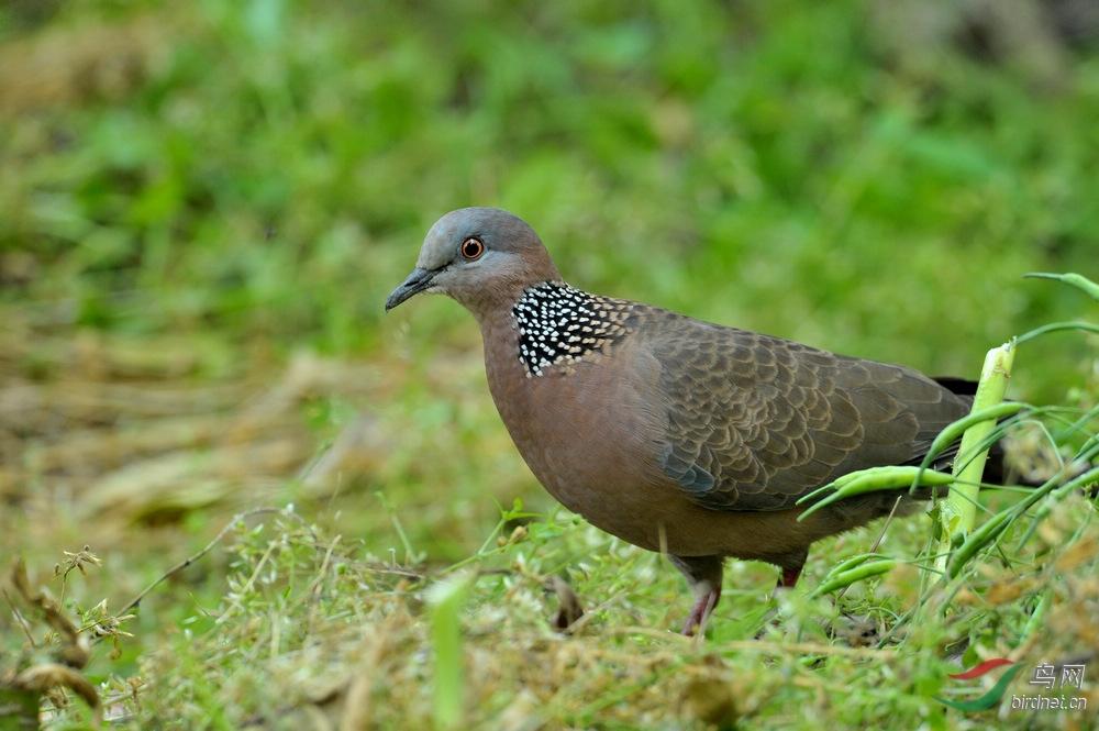 51期间小区拍的几只小鸟6.jpg