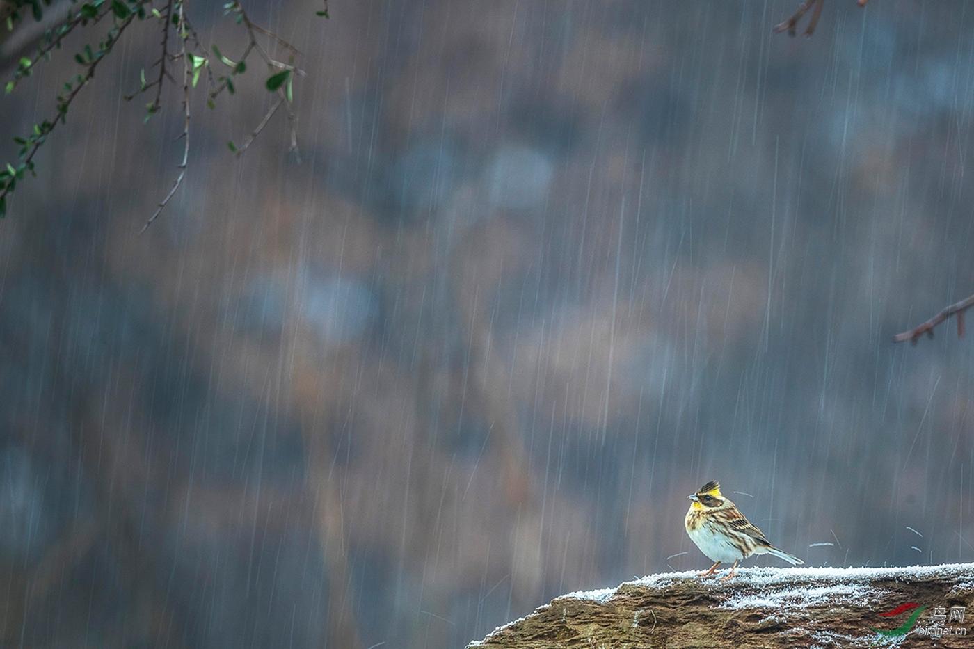 DO5890-020-A2-B-I am a tiny little bird--商华.jpg