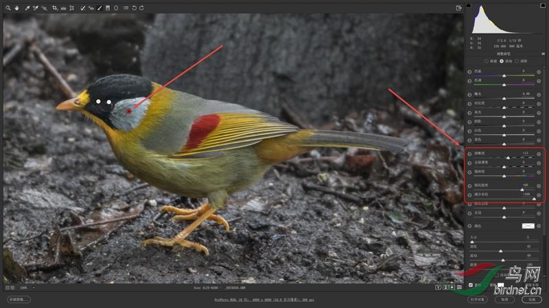 """02-1 使用画笔工具中的""""清晰度""""和""""锐化程度""""提高鸟喙、头、翅、腿脚局部区域的锐化度.jpg"""