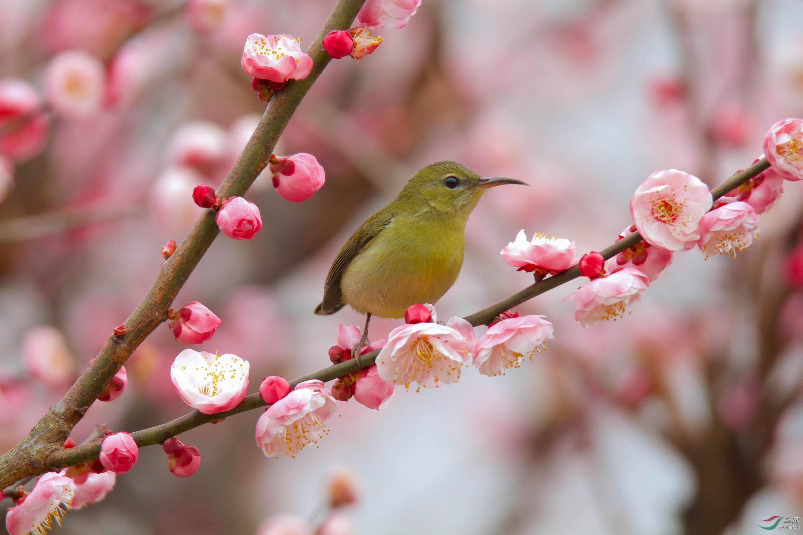 叉尾太阳鸟-三峡坝区.jpg