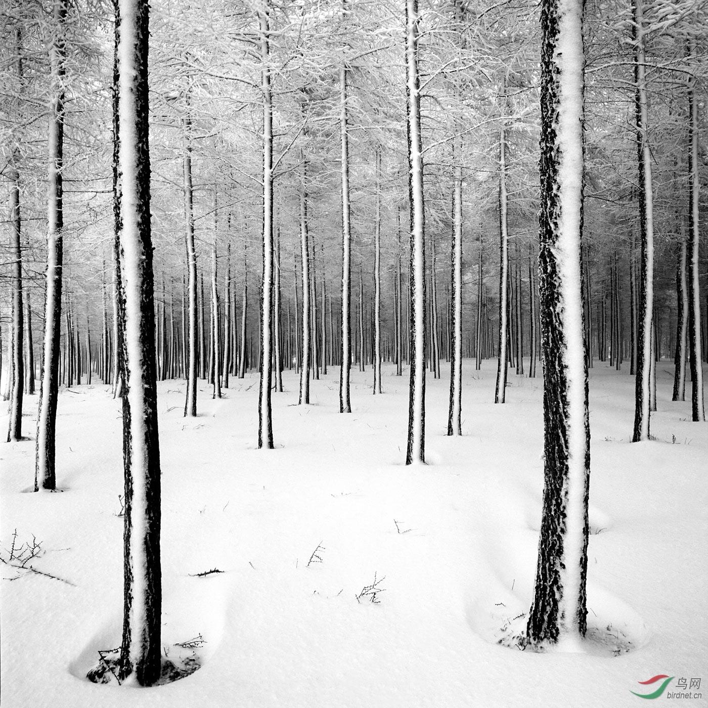 林海雪原.jpg