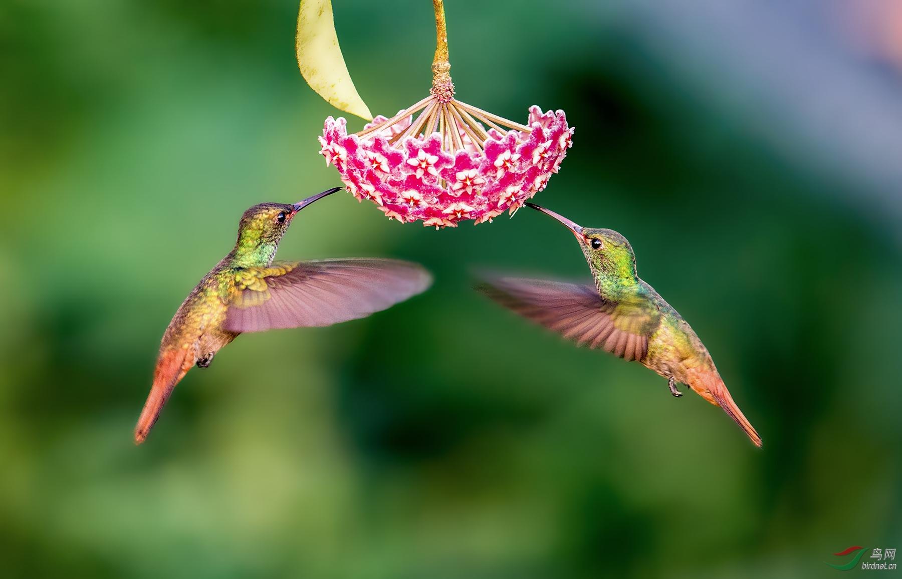 护花.jpg