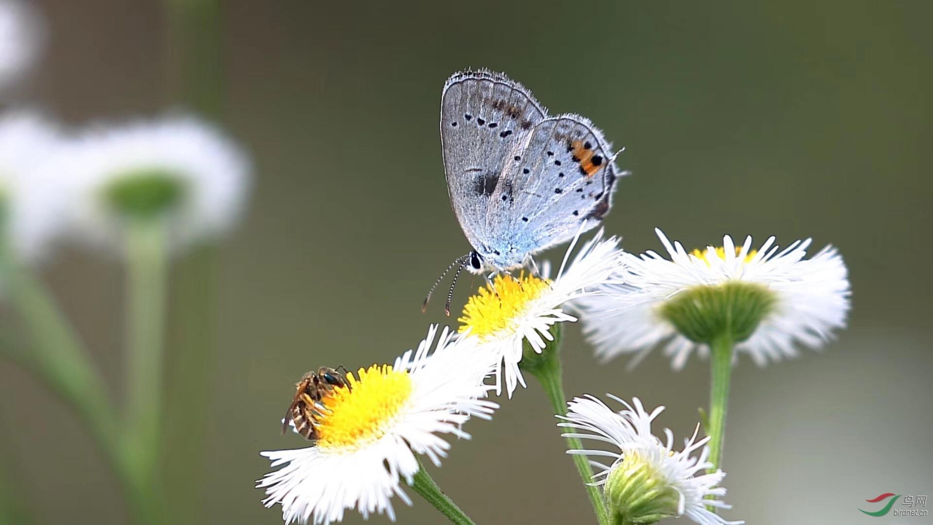 你若盛开蝴蝶自来 你若盛开蝴蝶自来全诗