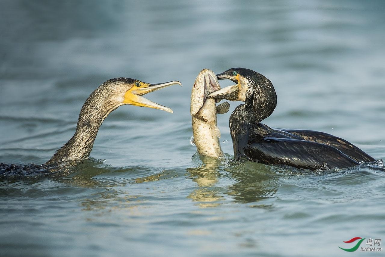 别抢啊,鱼是我的.jpg