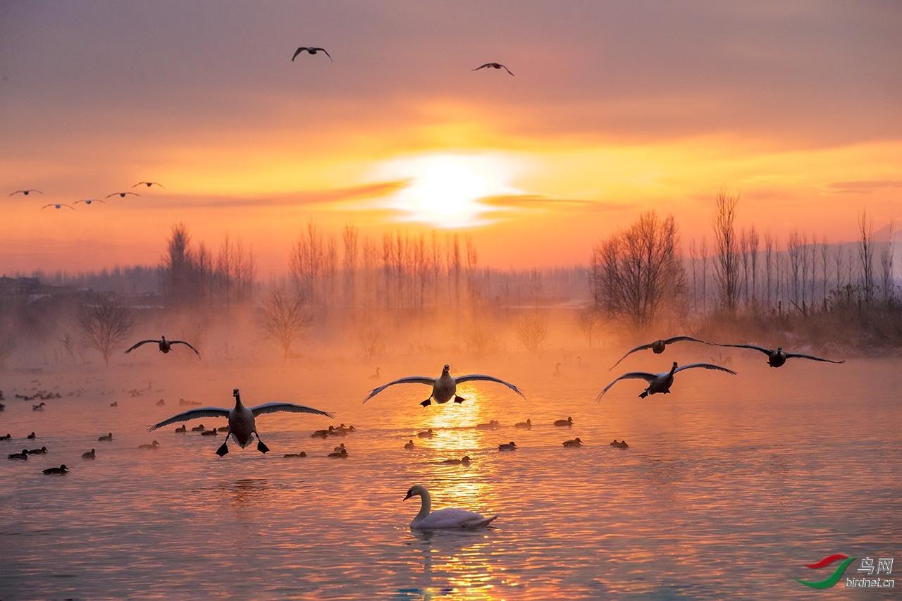 晨光中的天鹅湖.jpg
