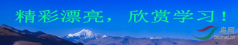 IMG_1797_conew3_副本.jpg