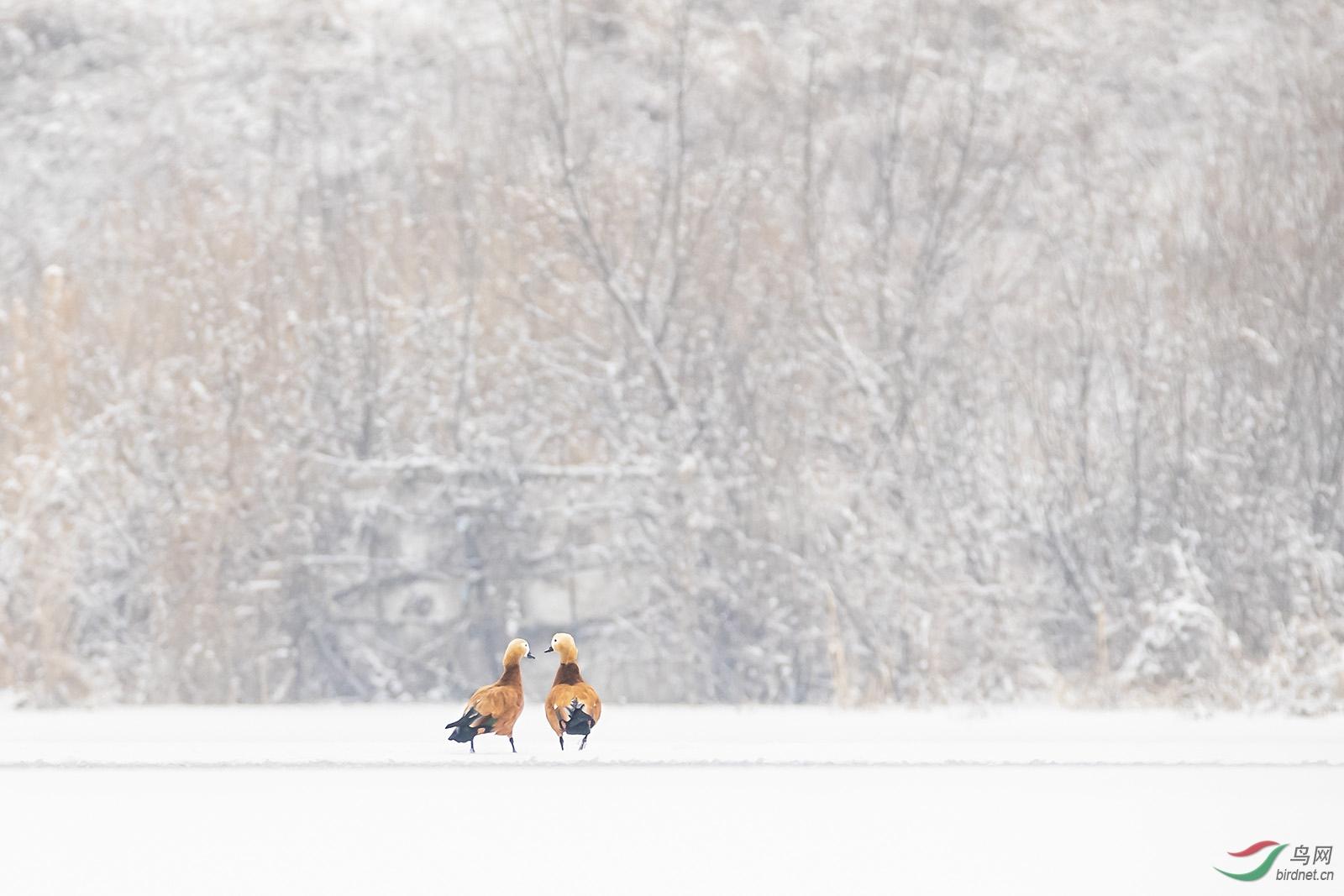 __6冬季恋情.jpg