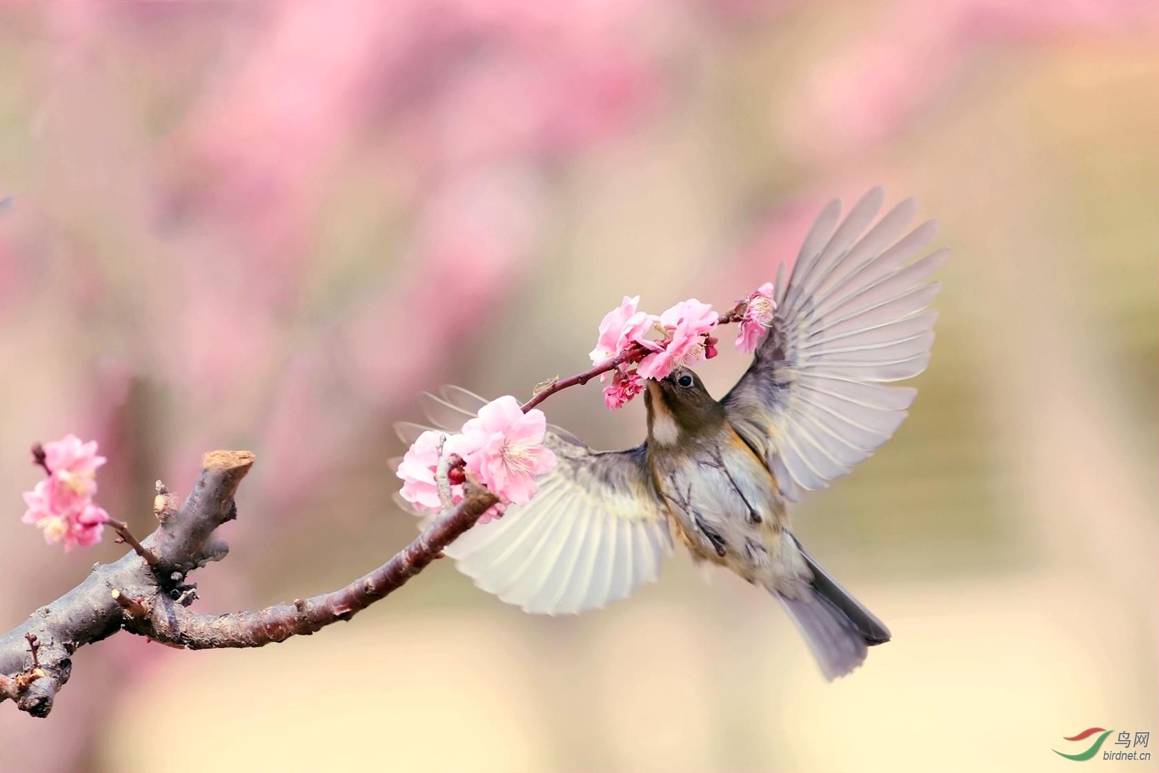 鸟从花里带香飞