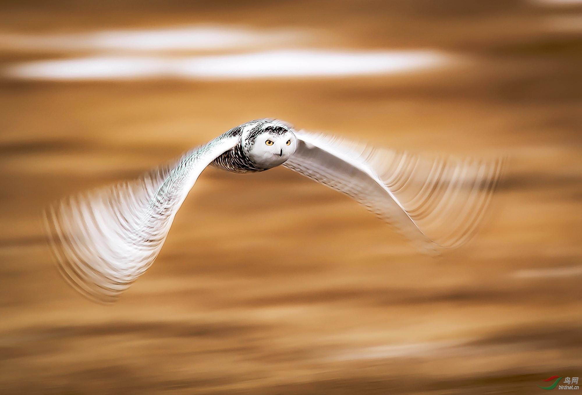 舞动的翅膀.jpg
