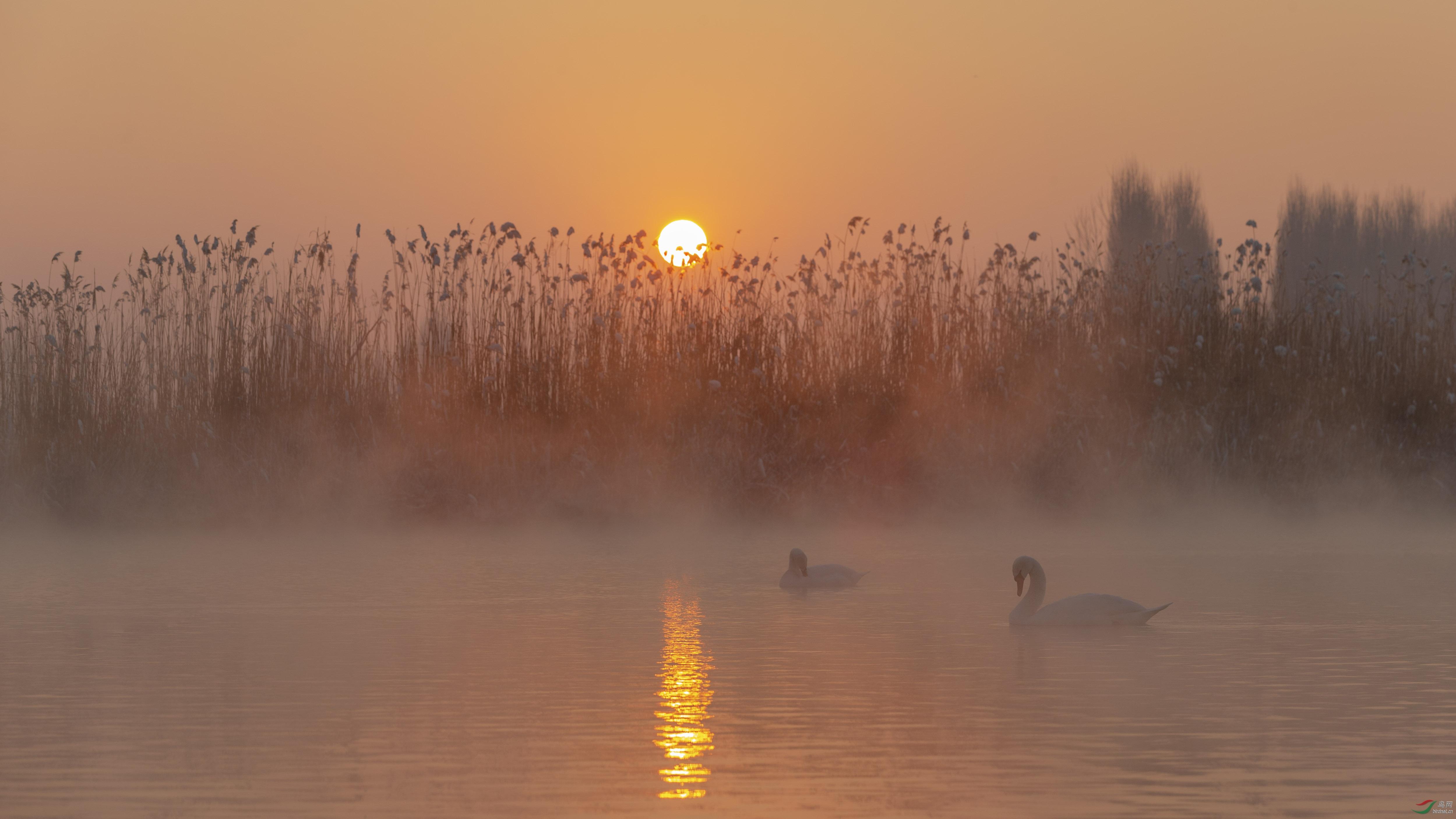 日落天鹅湖.jpg