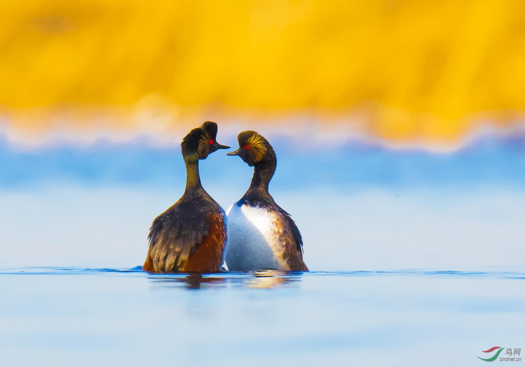 浪漫前的温馨时刻!