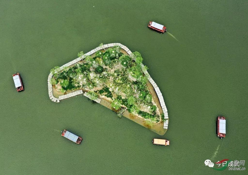 空中鸟瞰鸟岛