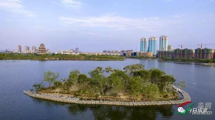 文亭湖鸟岛就在成武县城的怀抱 中