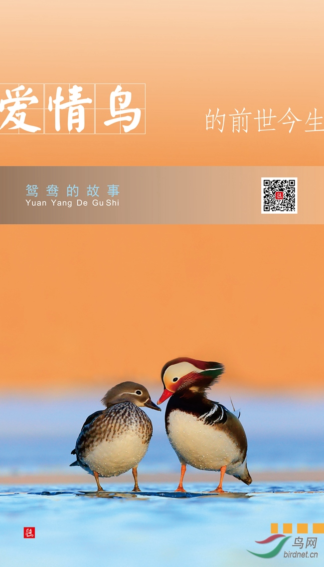 鸳鸯海报新1.jpg