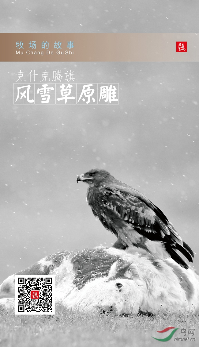草原雕海报3.jpg