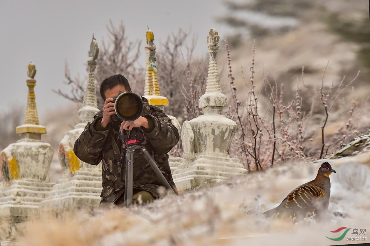 摄影师与鸟--.jpg