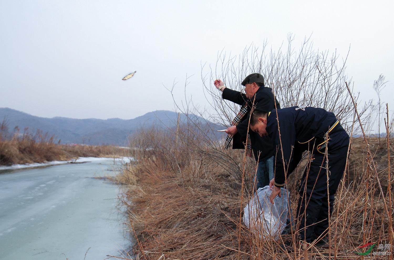 志愿者陈雄平在给苍鹭投食.